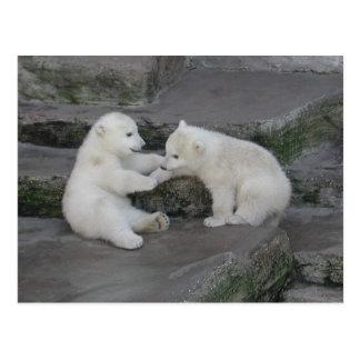 Zwei Eisbärjunge Postkarte