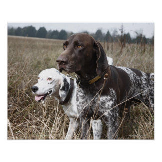 Zwei Hunde auf dem Gebiet, Houston, Texas, USA Poster