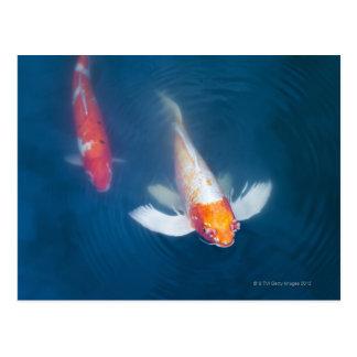 Zwei japanische koi Fische im Teich Postkarte