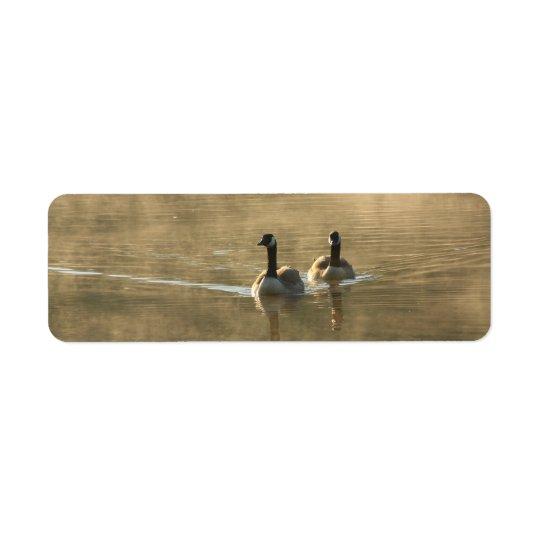 zwei Kanada-Gänse, die auf dem Fluss durch Rücksendeetikett