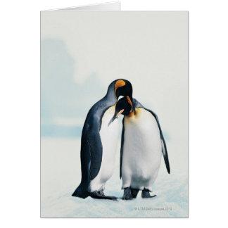 Zwei liebevolle Pinguine Karte