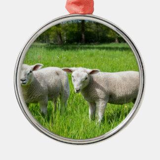 Zwei weiße niederländische Schafe in der grünen Rundes Silberfarbenes Ornament