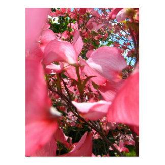 Zwischen Blumenblättern Postkarte